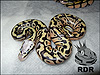 2012 Super Pastel het Clown
